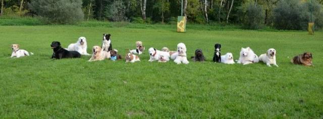 Terapevtski psi Zavoda PET