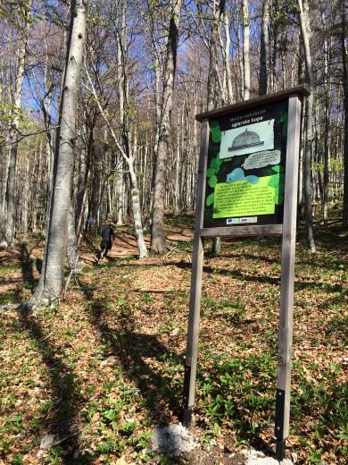 Na gozdni učni pešpoti smo se učili o zanimivostih teh krajev.