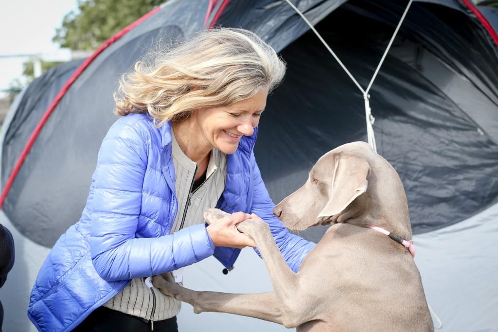 Lastniki ves čas skrbijo, da se psi na razstavi dobro počutijo.