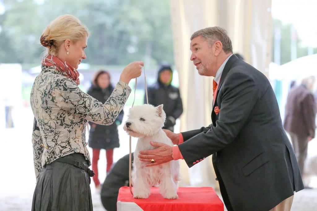 Kinološki sodniki bodo določili pasje šampione.