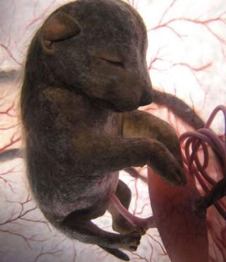 12 nevjerojatnih beba embrija