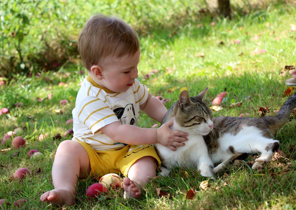 Bebeač i mačka