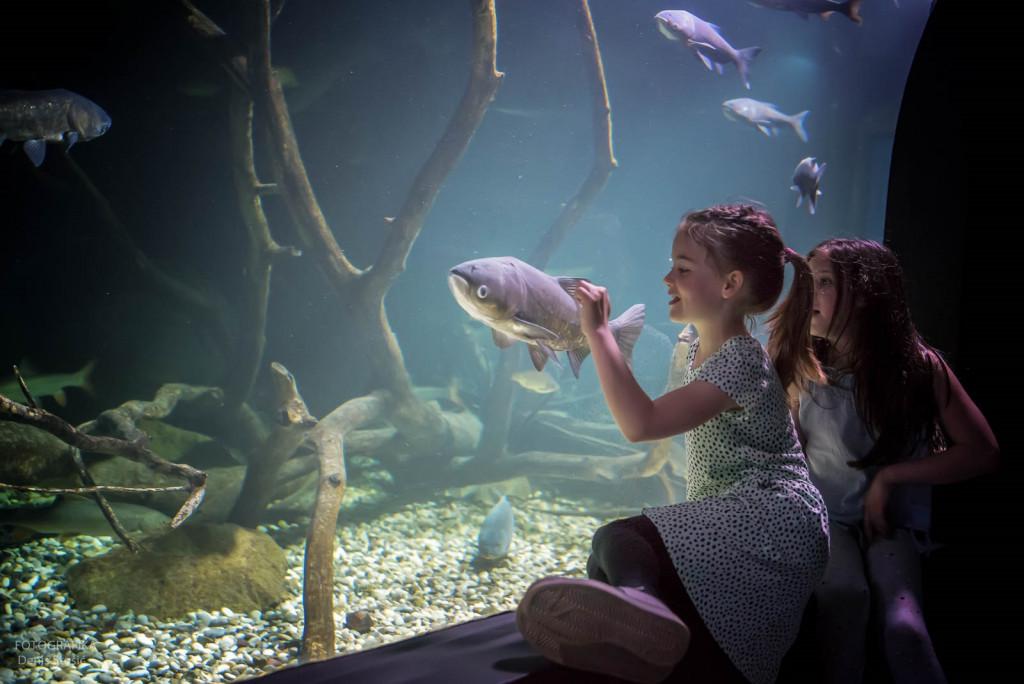 autor Denis Stošić_djevojčice ispred akvarija