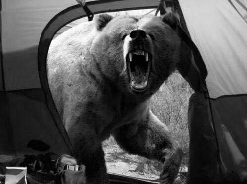 To je zadnja slika fotografa, ki je fotografiral divjino. Prikazuje medveda, ki ga je kasneje tudi ubil. (FOTO: weheartit.com)