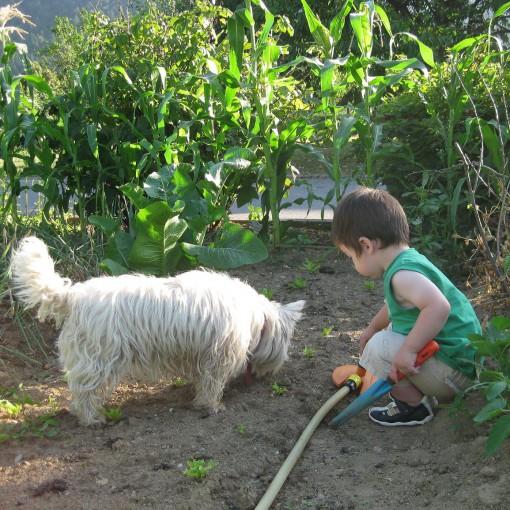Tudi pasja pomoč pri vrtnarjenju je dobrodošla