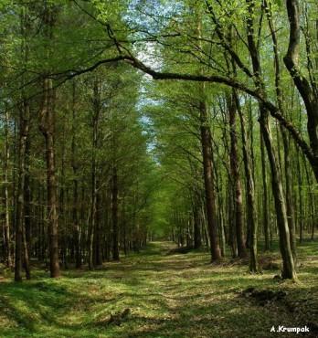 Gozd spomladi