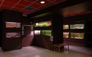 Foto: osebni arhiv Akvarija M