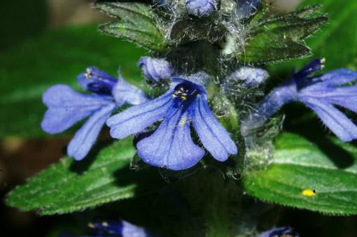 Bogato rastlinje