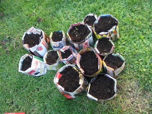 Posejana semena špargljev