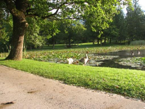 Jezero v parku