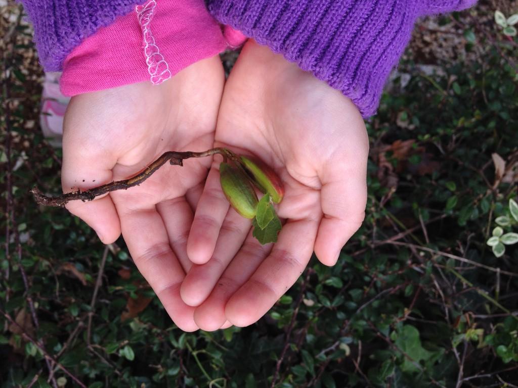 Posadimo plod, da zraste drevo. (Foto: arhiv Zeleni prstki)