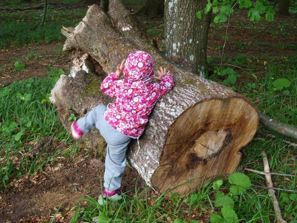 Naj otrok sam spleza na drevo. (Foto: arhiv Zeleni prstki)