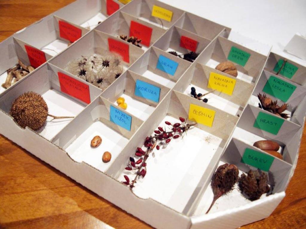 Škatla zakladov iz narave (Foto: arhiv Zeleni prstki)