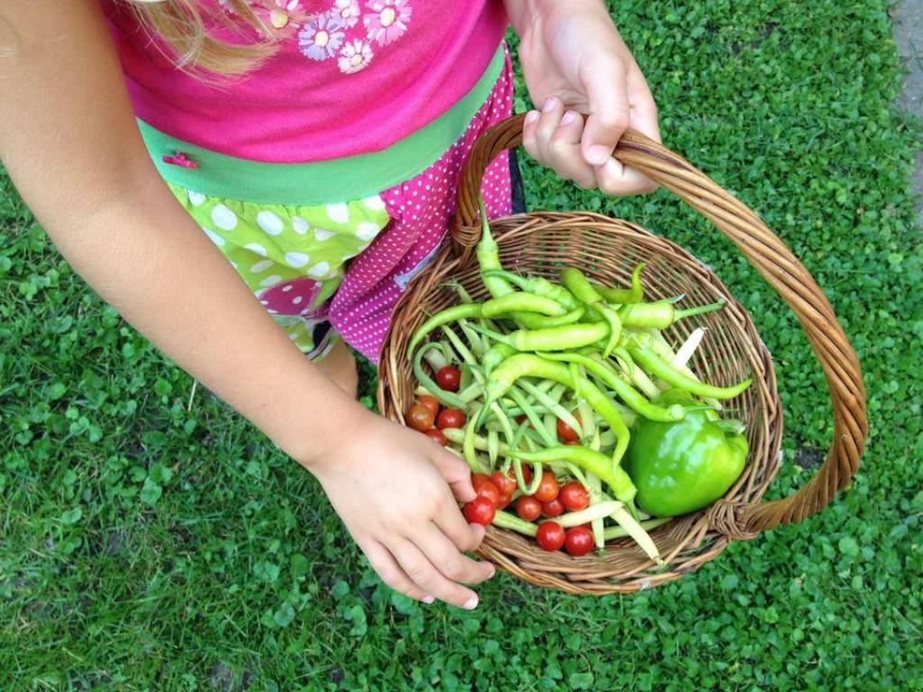 Ni boljšega, kot zelenjava z domačega vrta.