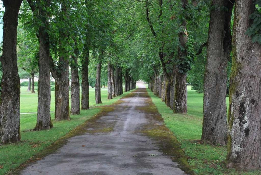 V senčki dreves (F: vnaravi.si)