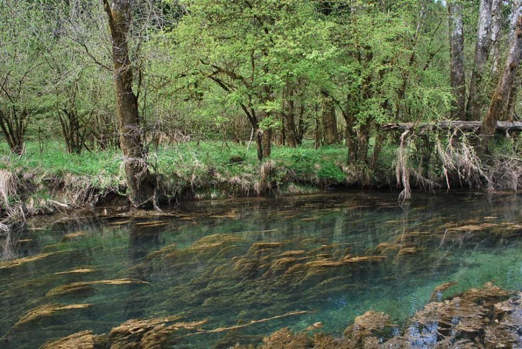 Zanimiv pogled v vodo reke Ribnice (F: vnaravi.si)