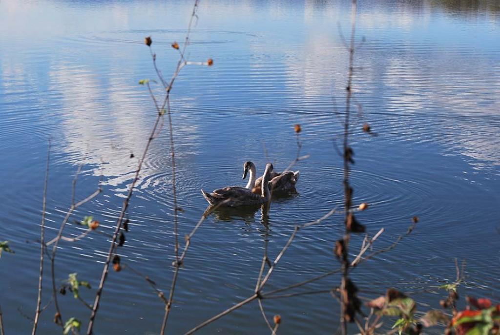 Pestro življenje ob ribniku bo navdušilo malčke.