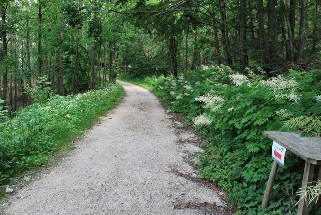 Pot nas vodi skozi gozd ... (F: vnaravi.si)