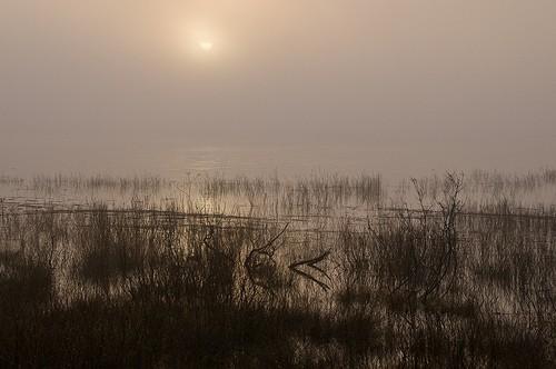 Jutranja meglica - Cerkniško jezero