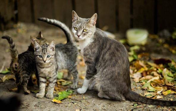 mačji mladiči