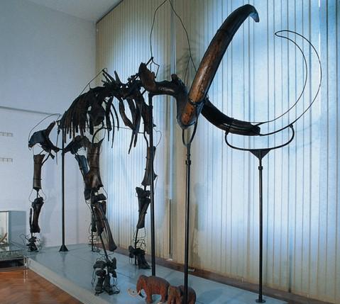 Okostje mamuta