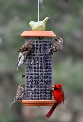 ptičja krmilnica