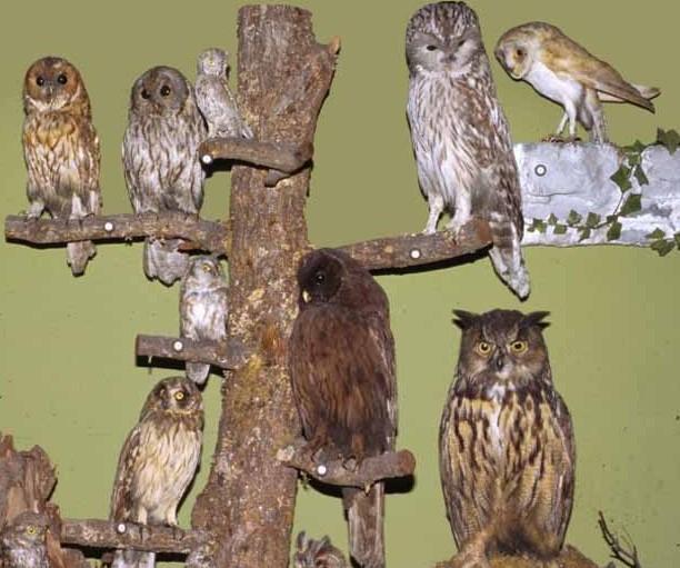 Zbirka ptičev