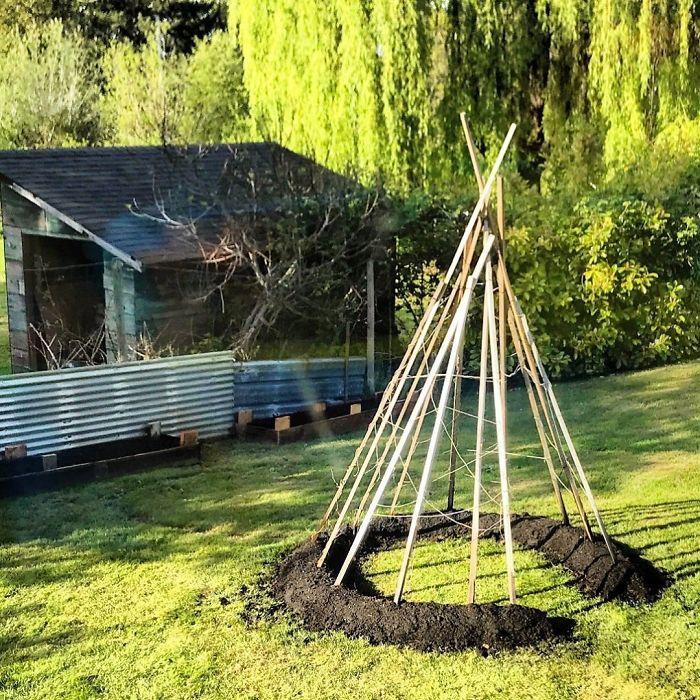 Fižolov šotor